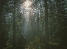 forest-605505_640